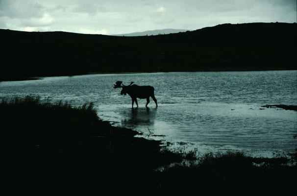 Alaska_2_Der_Fotoraum_Jürgen_Sedlmayr_301