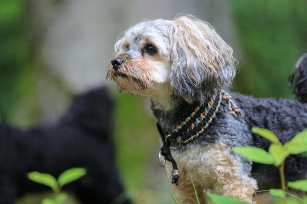 Hunde-FotoShooting-Rheinzabern-Tierfotografie-Juergen-Sedlmayr-08