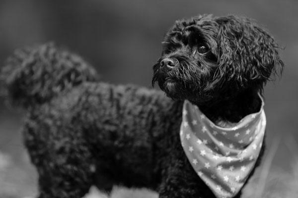 Tierfotografie-Hunde-FotoShooting-Rheinzabern-Juergen-Sedlmayr-09