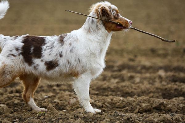 Fotogalerie-Tierfotografie-Juergen-Sedlmayr-HUND-35