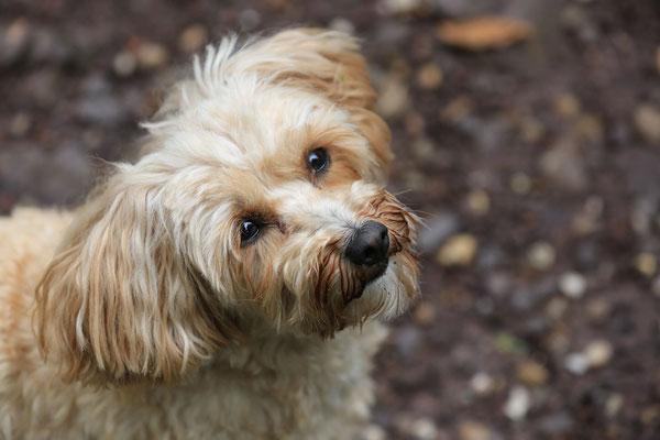 Hunde-FotoShooting-Rheinzabern-Tierfotografie-Juergen-Sedlmayr-06