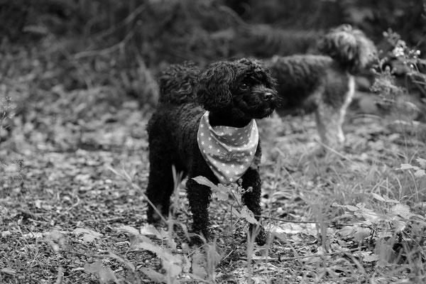 Hunde-FotoShooting-Rheinzabern-Der-Fotoraum-Juergen-Sedlmayr-07