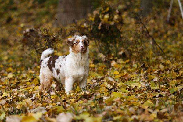 Fotogalerie-Tierfotografie-Juergen-Sedlmayr-HUND-38