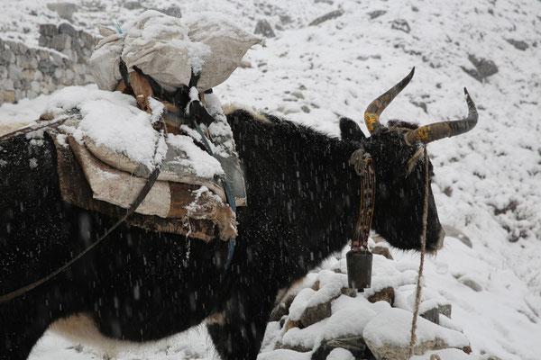 Nepal_Everest4_Expedition_Adventure_Jürgen_Sedlmayr_204