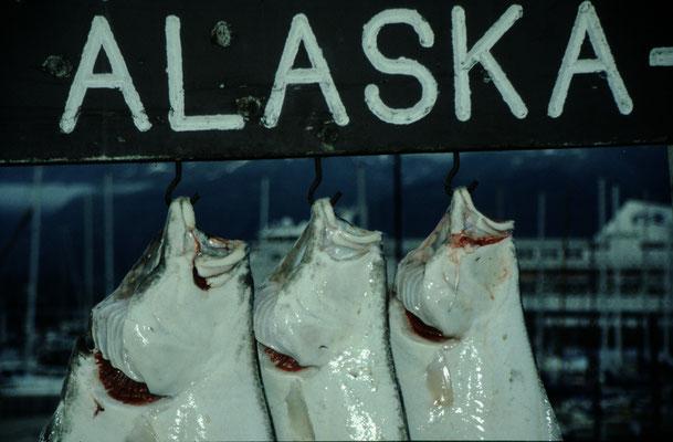 Alaska_2_Reisefotograf_Abenteurer_Jürgen_Sedlmayr_147
