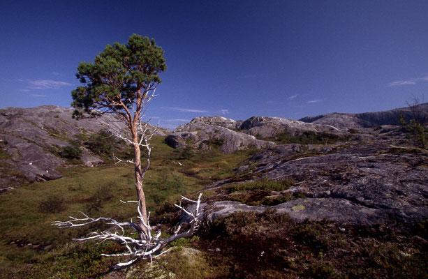 Norwegen_2005_Jürgen_Sedlmayr_260
