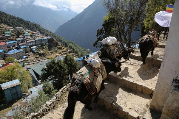Nepal_Everest3_Abenteurer_Jürgen_Sedlmayr_113