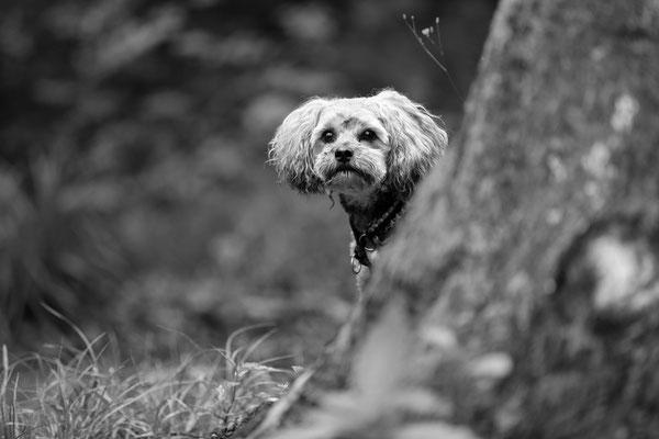 Tier-Shooting-Hunde-Rheinzabern-Der-Fotoraum-Juergen-Sedlmayr-Wald-164