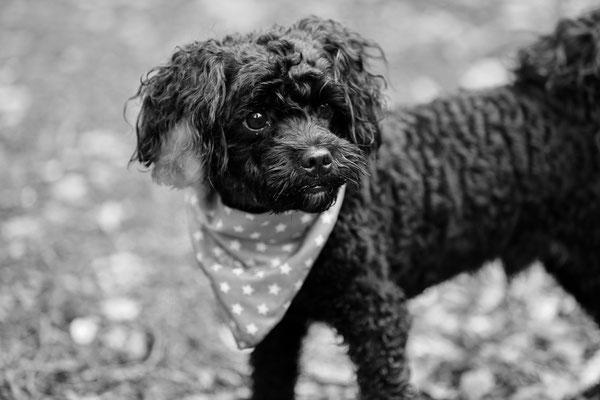Tierfotografie-Hunde-FotoShooting-Rheinzabern-Juergen-Sedlmayr-08