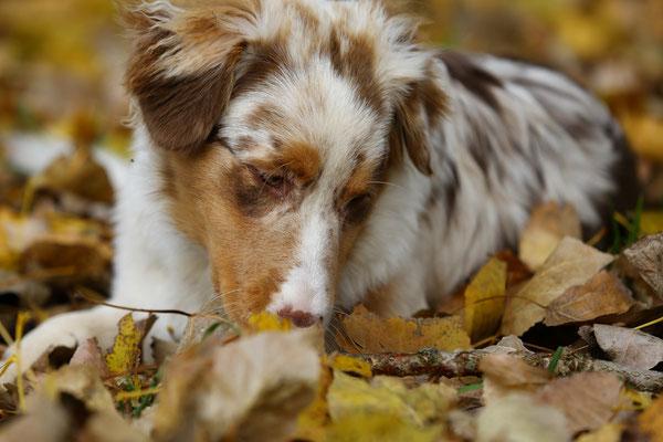 Tierfotografie-Sommer-Winter-Juergen-Sedlmayr-HUND-23