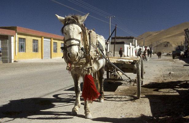 Tibet_Reisefotograf_Abenteurer_Jürgen_Sedlmayr_65