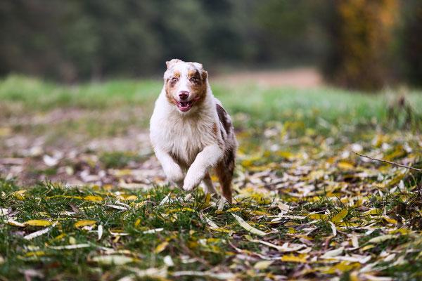 Tierfotografie-Landau-Juergen-Sedlmayr-Hund_sd