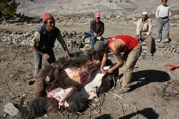 Nepal_Mustang_Der_Fotoraum_Abenteurer_Jürgen_Sedlmayr_370
