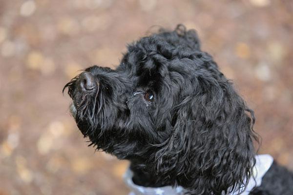 Hunde-FotoShooting-Rheinzabern-Tierfotografie-Juergen-Sedlmayr-09