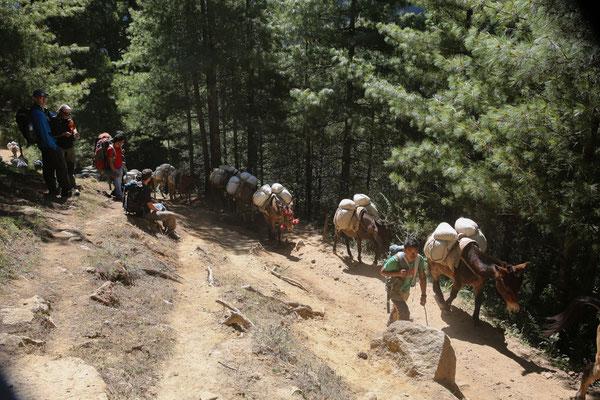 Nepal_Everest1_Der_Fotoraum_Jürgen_Sedlmayr_157