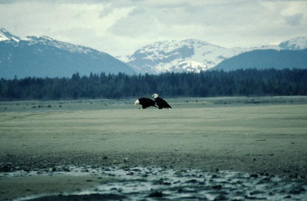 Alaska_2_Reisefotograf_Jürgen_Sedlmayr_193