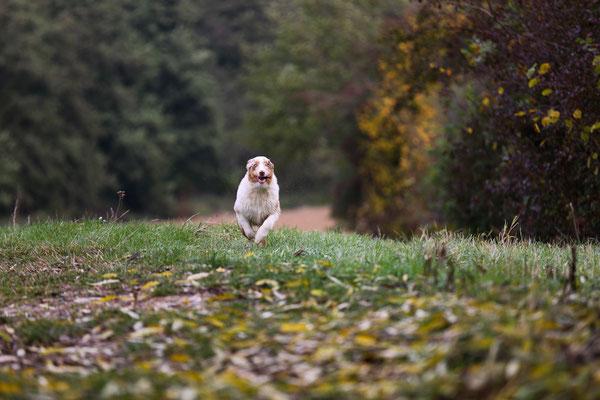 Tierfotografie-Juergen-Sedlmayr-HUND-30-Tierfotograf-gesucht?