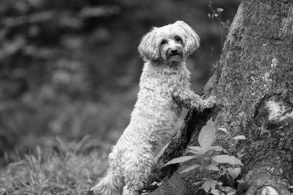 Hunde-Shooting-Rheinzabern-Der-Fotoraum-Juergen-Sedlmayr-Wald-166