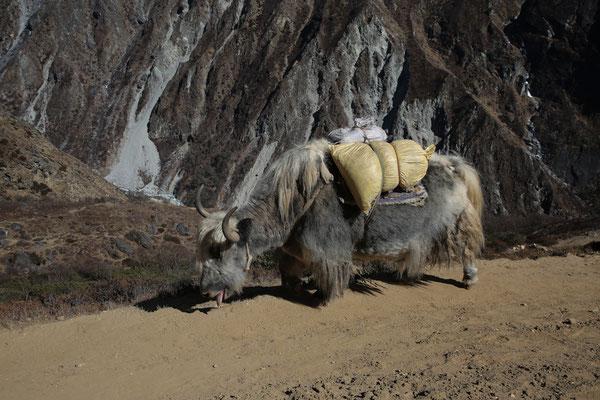 Fotogalerie_Nepal_Everest2_Reisefotograf_Jürgen_Sedlmayr_164