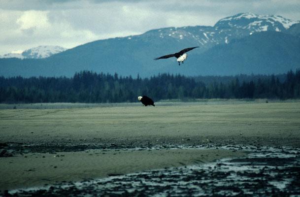 Alaska_2_Reisefotograf_Jürgen_Sedlmayr_171