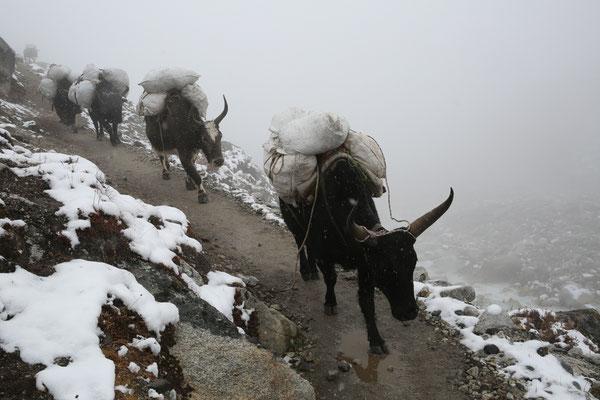 Nepal_Everest4_Der_Fotoraum_Jürgen_Sedlmayr_231