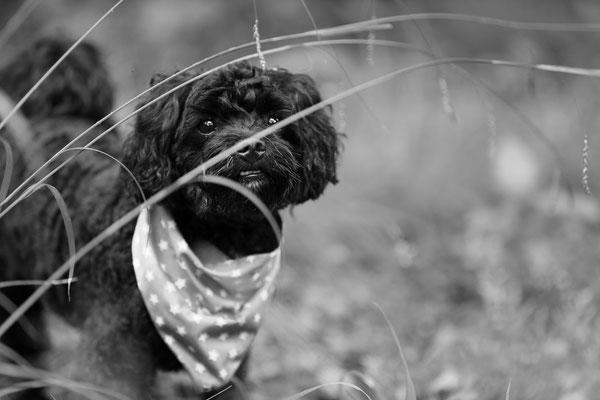 Hunde-FotoShooting-Rheinzabern-Tierfotografie-Juergen-Sedlmayr-03