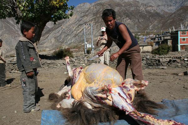 Nepal_Mustang_Der_Fotoraum_Abenteurer_Jürgen_Sedlmayr_369