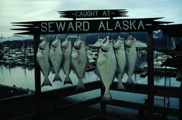 Alaska_2_Jürgen_Sedlmayr_229