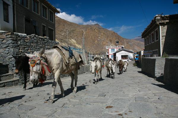 Nepal_Mustang_Expedition_Adventure_Reisefotograf_459