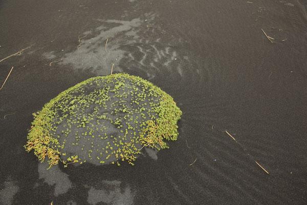 ISLAND_3.3_Reisefotograf_Jürgen_Sedlmayr_173