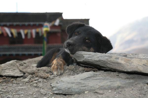 Nepal_Mustang_Expedition_Adventure_Reisefotograf_Jürgen_Sedlmayr_185