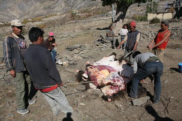 Nepal_Mustang_Der_Fotoraum_Abenteurer_Jürgen_Sedlmayr_372