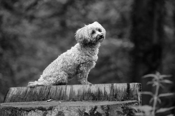 Tier-Shooting-Hunde-Rheinzabern-Der-Fotoraum-Juergen-Sedlmayr-Wald-158
