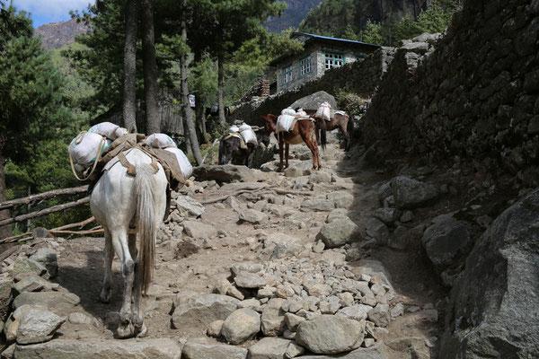 Nepal_Everest3_Reisefotograf_Jürgen_Sedlmayr_63