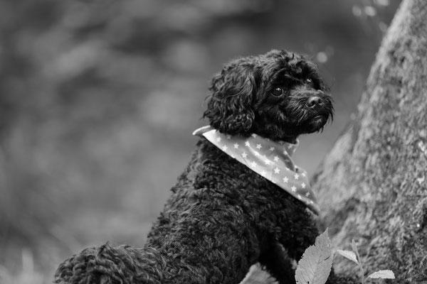 Hunde-FotoShooting-Rheinzabern-Tierfotografie-Juergen-Sedlmayr-01