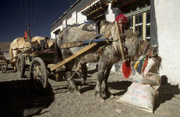 Tibet_Reisefotograf_Abenteurer_Jürgen_Sedlmayr_60
