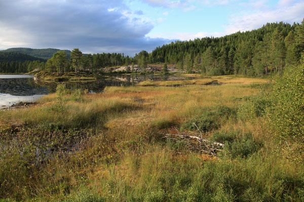 Jürgen Sedlmayr Reisefotograf | Norwegen | Wald