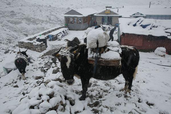 Nepal_Everest4_Expedition_Adventure_Jürgen_Sedlmayr_205