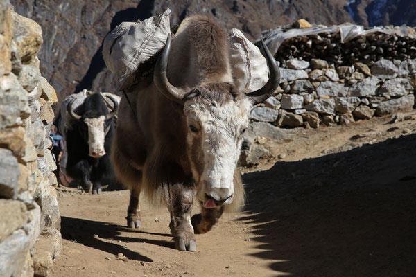 Nepal_Everest2_Abenteurer_Jürgen_Sedlmayr_108