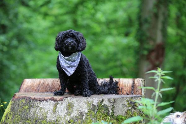 Hunde-FotoShooting-Rheinzabern-Der-Fotoraum-Juergen-Sedlmayr-04