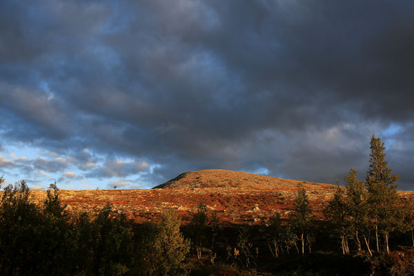 Jürgen Sedlmayr Reisefotograf | Norwegen | Abendsonne im Fjell