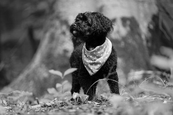 Hunde-FotoShooting-Rheinzabern-Tierfotografie-Juergen-Sedlmayr-07