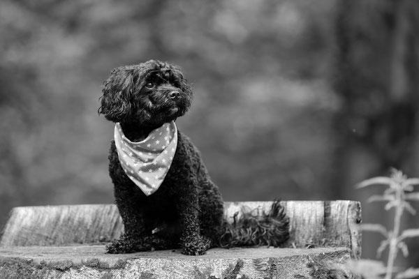 Tierfotografie-Hunde-FotoShooting-Rheinzabern-Juergen-Sedlmayr-01
