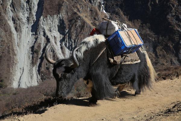 Fotogalerie_Nepal_Everest2_Reisefotograf_Jürgen_Sedlmayr_163