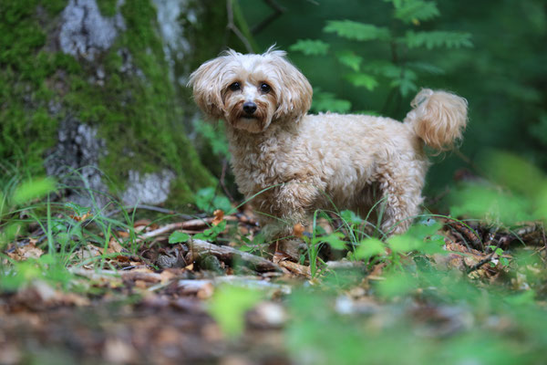 Hunde-FotoShooting-Rheinzabern-Tierfotografie-Juergen-Sedlmayr-10