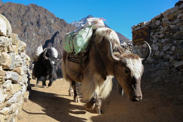 Nepal_Everest2_Abenteurer_Jürgen_Sedlmayr_107