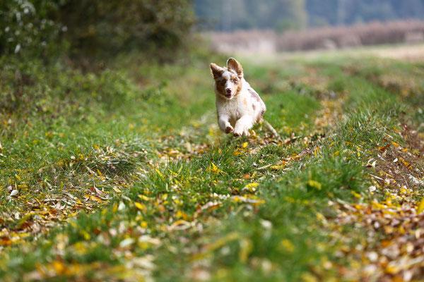 Tierfotografie-Juergen-Sedlmayr-sx