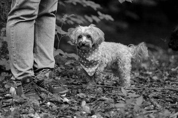 Hunde-FotoShooting-Rheinzabern-Tierfotografie-Juergen-Sedlmayr-02