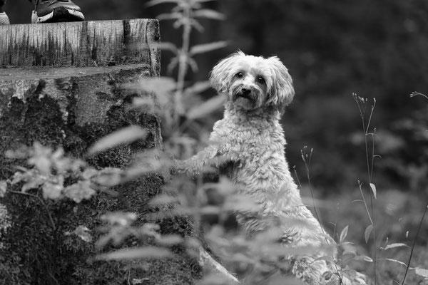 Hunde-Shooting-Rheinzabern-DER-FOTORAUM-05