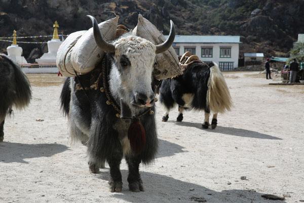 Nepal_Everest3_Der_Fotoraum_Jürgen_Sedlmayr_293